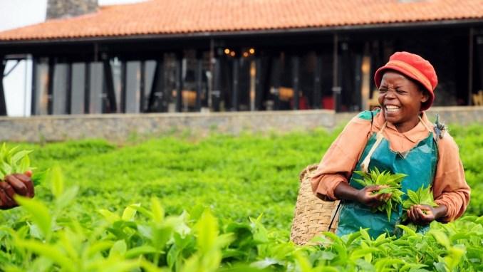 TAKE A TOUR OF A TEA OR COFFEE PLANTATION