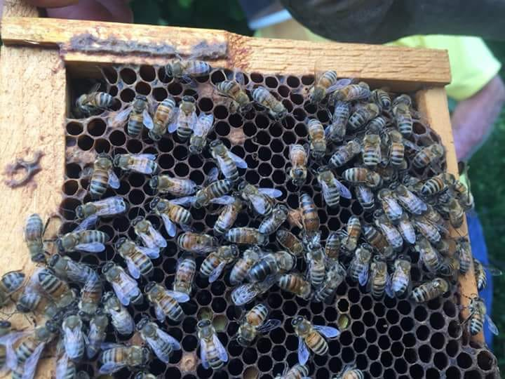 John Ferrell' bee hives