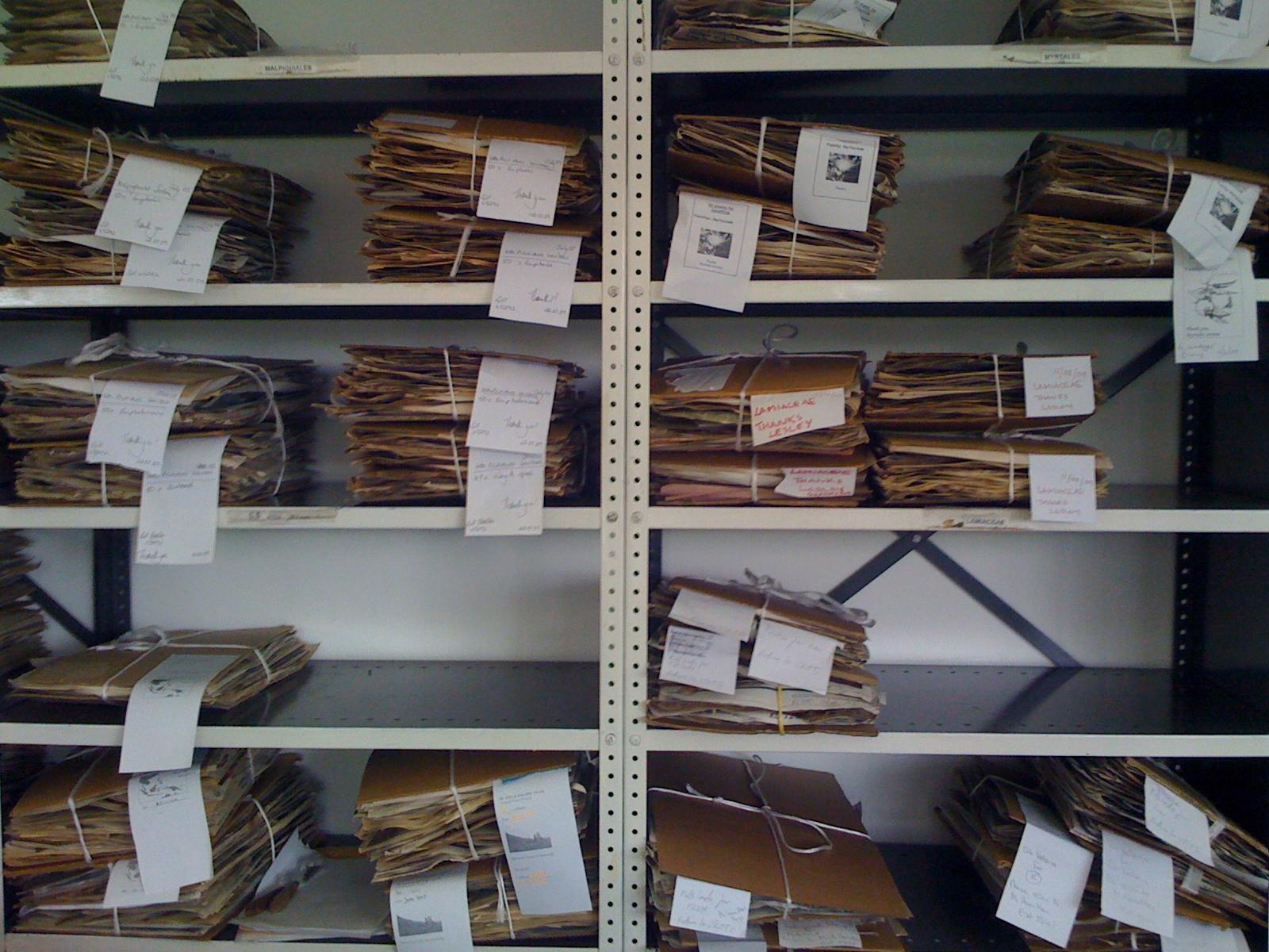 Herbarium - specimens awaiting collection