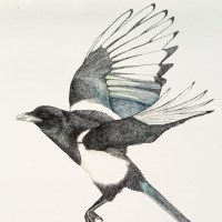 Magpies by Kenneth Gurney