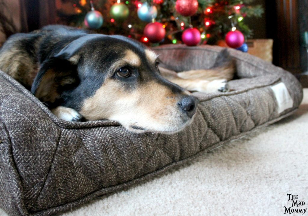 I was so excited to get her an orthopedic friendly, CertiPUR-US foam dog bed from Brentwood Home!