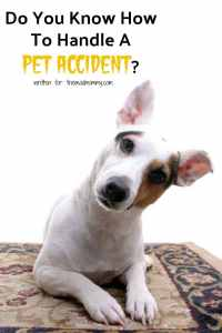 Do You Know How To Handle A Pet Accident?
