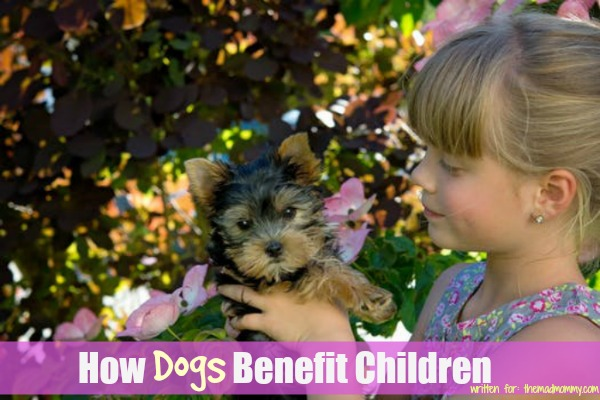 If you grew up with a beloved dog, you know that the benefits of being raised with pets can be priceless. Here is how dogs benefit children!