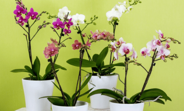 Know Your Flowers: Types of Orchids