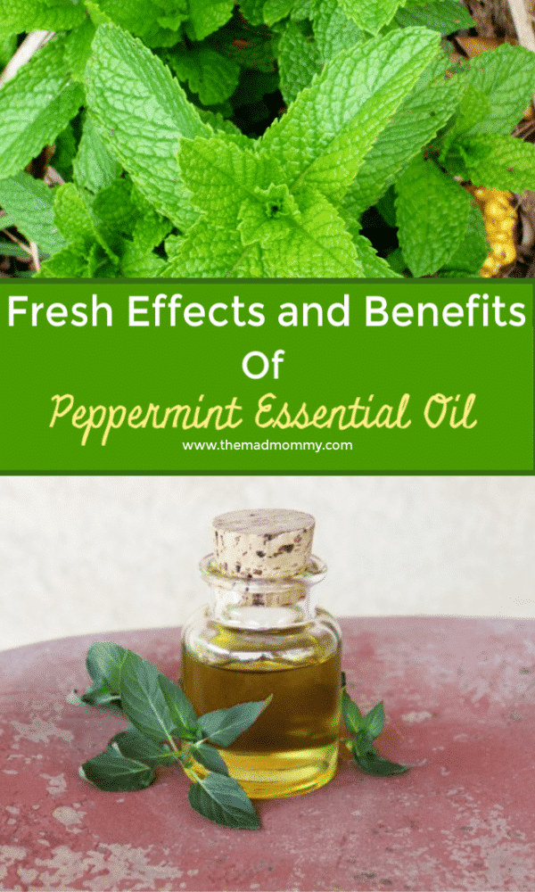 As an essential oil, peppermint has become a powerhouse in the realm of health and wellness, providing a staggering amount of health benefits ranging from shinier hair to a healthier digestive system. Read on to learn some of the amazing health benefits of peppermint essential oil and the effects it can have on you both physically and mentally.