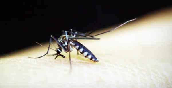 7 Common Bug Bites You Shouldn't Turn a Blind Eye To