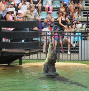 Bindi feeds a croc..