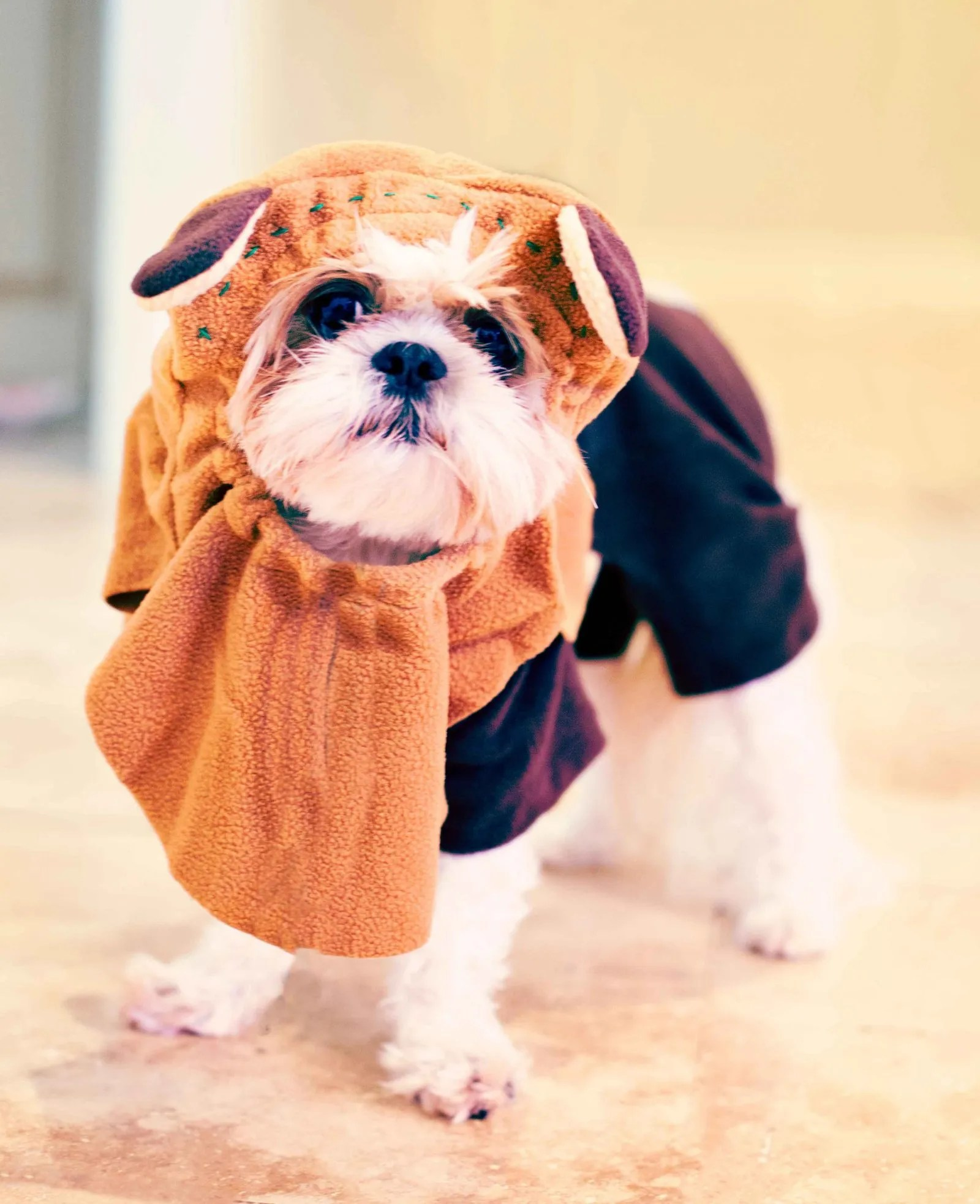 halloween costumes for dogs – the majestic mama