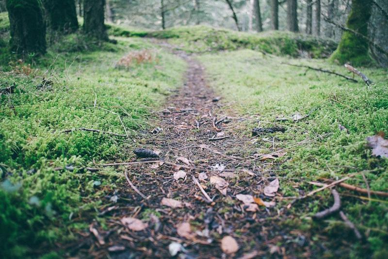 path maturity blogging