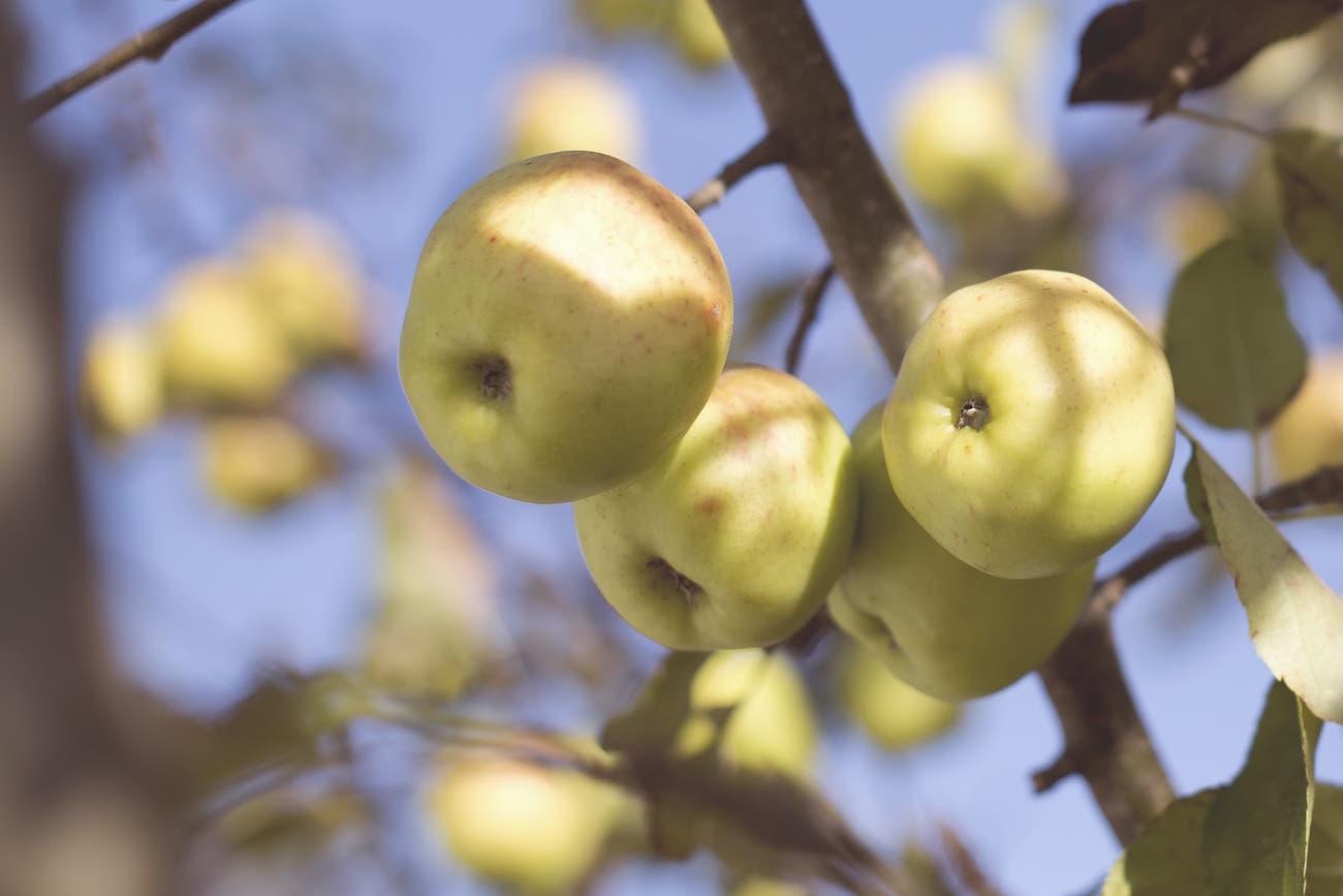 fruit of the spirit fruit tree image
