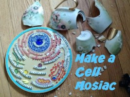 Make a Cell Mosiac with Rachel Nador on www.TheMakerMom.com