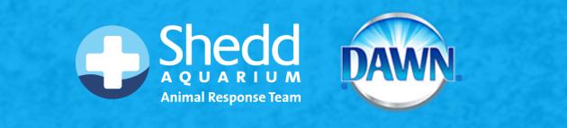 Dawn Dish Soap supports Shedd Aquarium Wildlife Education program and contest for Chicago Schools. Win a Shedd Aquarium Field Trip
