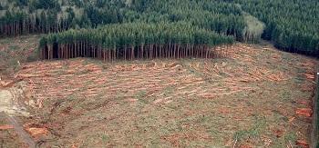 Industrial forest management, Olympic Peninsula, Washington.