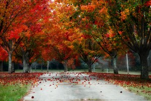 Progressive Conservatives claim unfair political representation in fall foliage