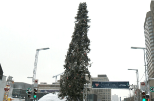 Small-penised Maritimer to Montréal Christmas tree fans: 'Size isn't everything'