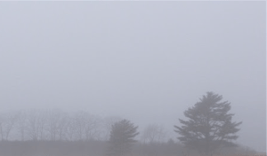 Fredericton southsiders enjoy foggy morning that masks 'disgusting' north side