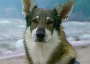 'The Littlest Hobo' getting gritty new remake
