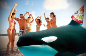 Whales continue to show up uninvited to local beach parties