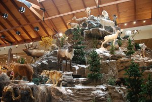 Taxidermied animals from closed Cabela's to be moved to Magnetic Hill Zoo