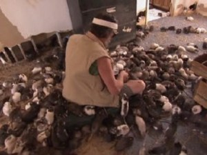Darlings Island hero saves more than 100 rats from flood waters