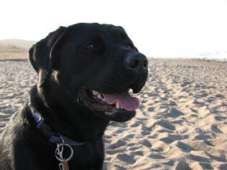 Trudeau adds New Brunswick dog to cabinet