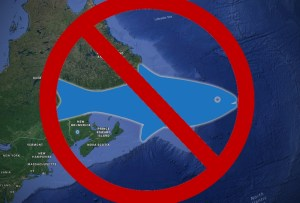 DFO: No more commercial fishing in Maritime oceans