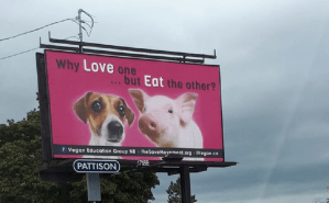 NBers confused by vegan billboards, start eating their pets