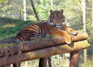 Cherry Brook Zoo to euthanize protesters