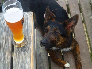 Nova Scotia brewers to just infuse all beer with dog hair to get it over with