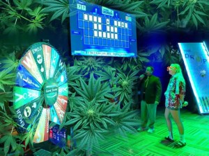 New Brunswickers compete for private sales in 'Cannabis Contract' game show