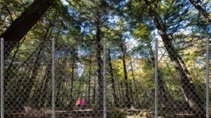 Odell Park to become fenced-in tree zoo