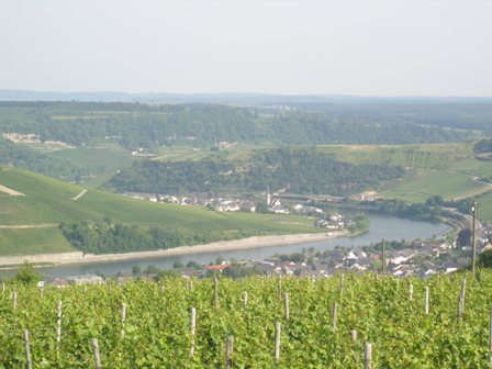 The other Mosel: The wines of Luxembourg  (2/6)