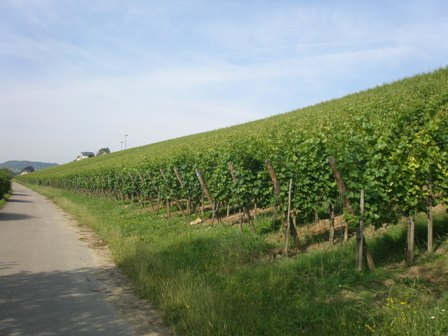 The other Mosel: The wines of Luxembourg  (6/6)
