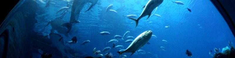 Family Travels: The Georgia Aquarium