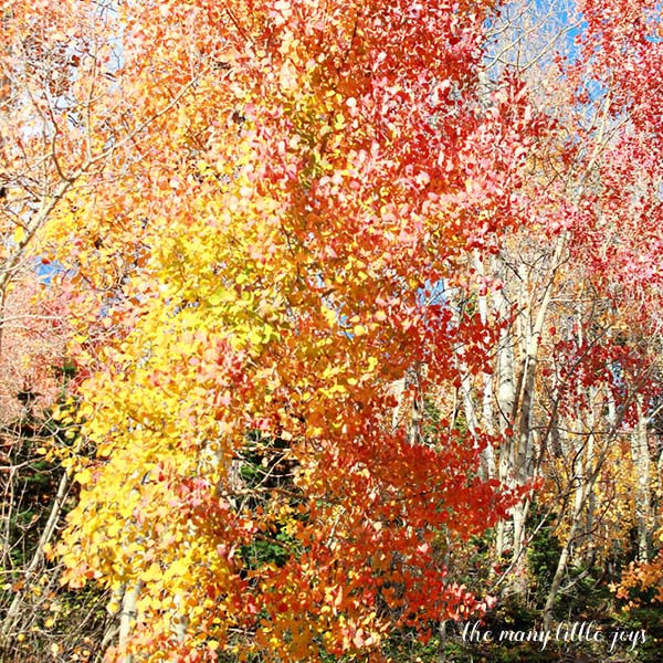 many-little-joys-of-october-changing-leaves