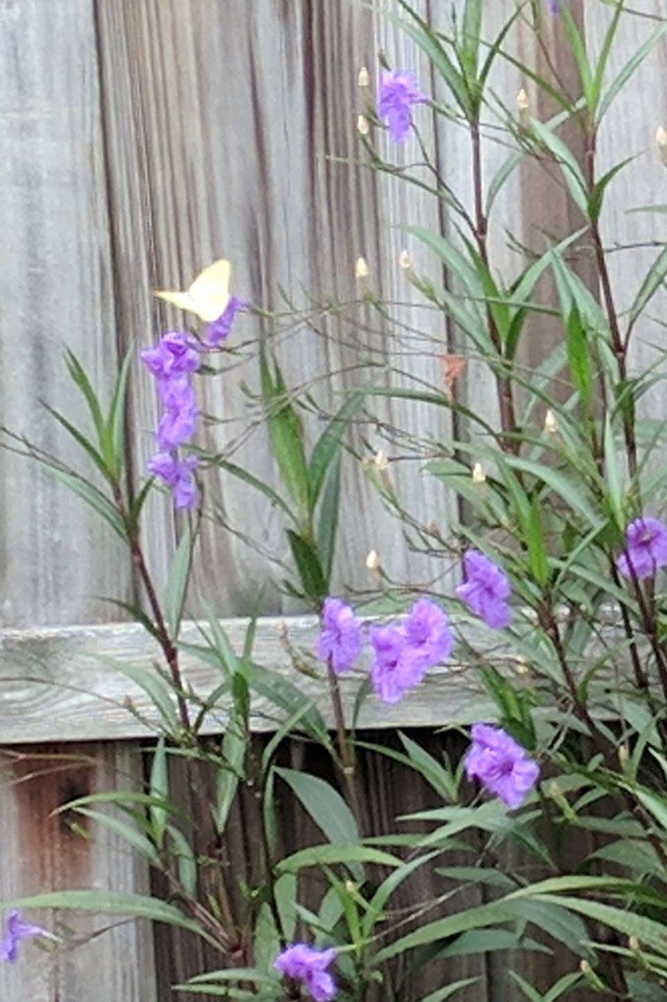 Seeing Yellow Butterflies can have many different meanings