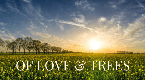 Of love and trees