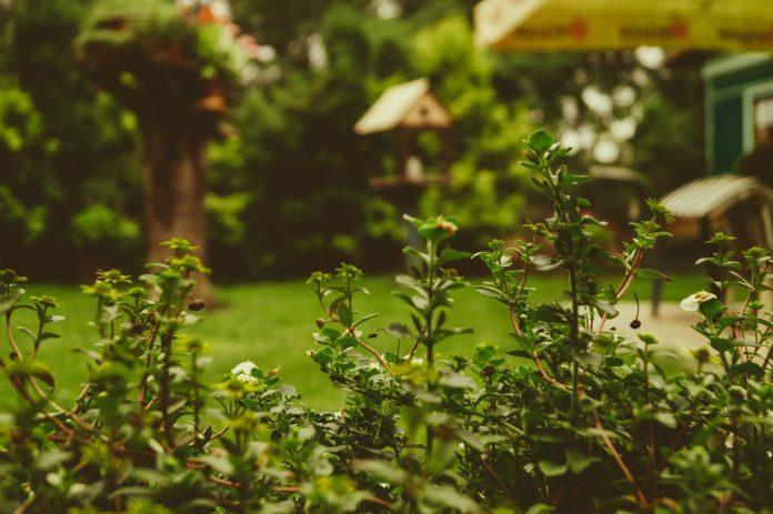A garden hack for the boardroom