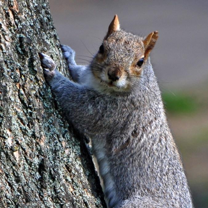 TheMayfairy Squirrel