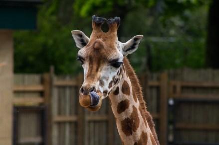 zoo (4 of 18)