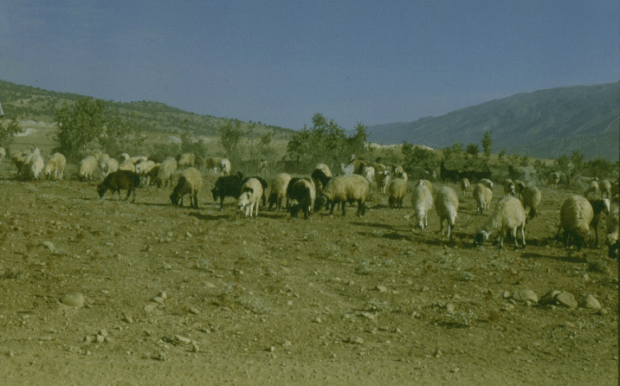 Sheeps and Degradation
