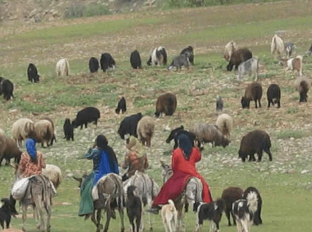 Herds and Herdpeople