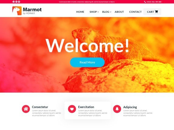 Read more about the article Best Free Portfolio WordPress Themes