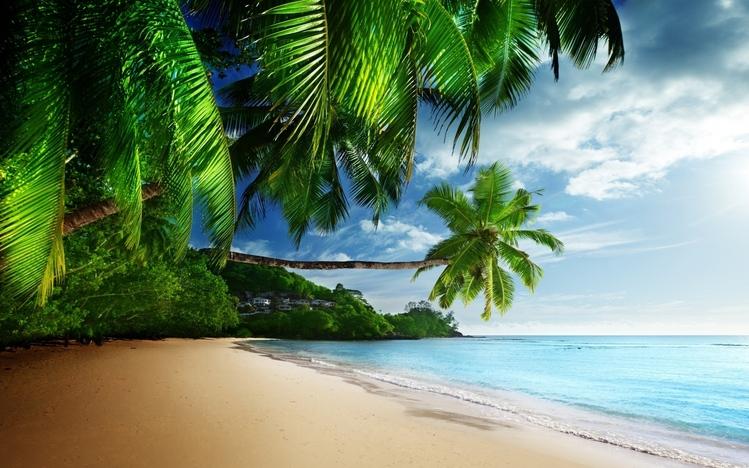 Tropical Windows 10 Theme