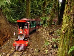 243-Trainforest_Monteverde_9 - Copie