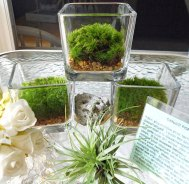 Glass terrariums - www.etsy.com/shop/NaturalWoodland
