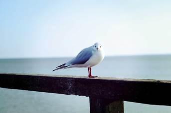 gallery-bird-4
