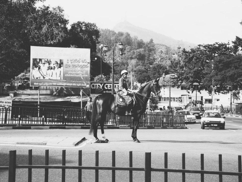 A horse regulating the traffice, Kandy city center.