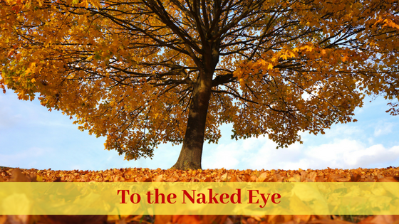 To the Naked Eye Blog