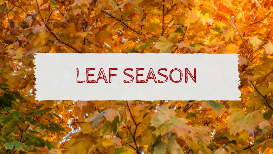 Leaf Season Blog